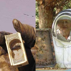 queen bee and bee hive